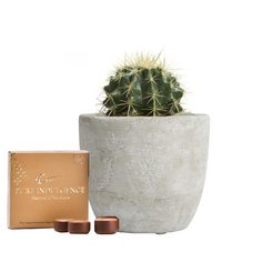 Cacti and Chocolates