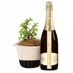 Money Tree & Chandon