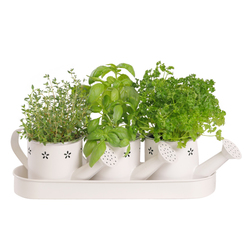 The Perfect Trio of Herbs Planter Box