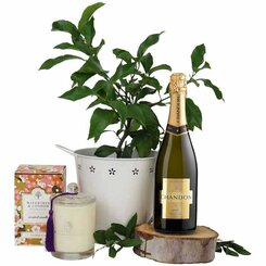 Lemon Tree Pamper Hamper
