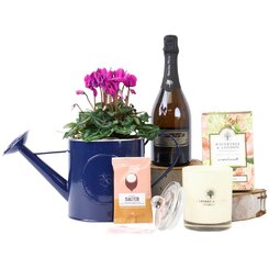 Cyclamen Bubbly Blue Hamper
