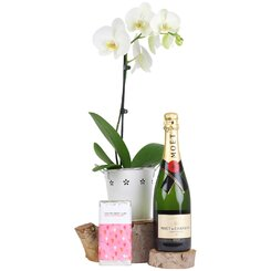 Sweetest Orchid and Bubbles Hamper