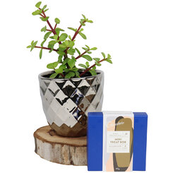Sparkling Money Tree Chocolate Gift