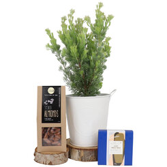 Festive Woolybush and Nuts Gift