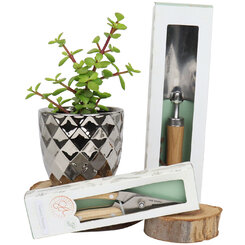 Sparkling Money Tree and Gardening Gift Set