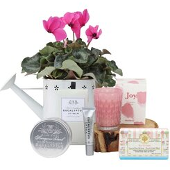 Cyclamen Pamper Hamper