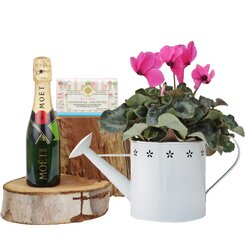 Cyclamen Moet Piccolo Dreams Gift