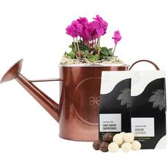 Cyclamen in Watering Can