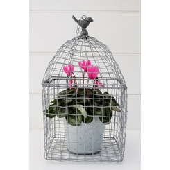 Cyclamen in Bird Cage