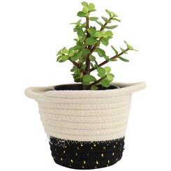 Money Tree in Woven Basket