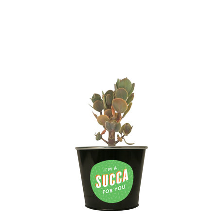 I'm a Succa For You Succulent