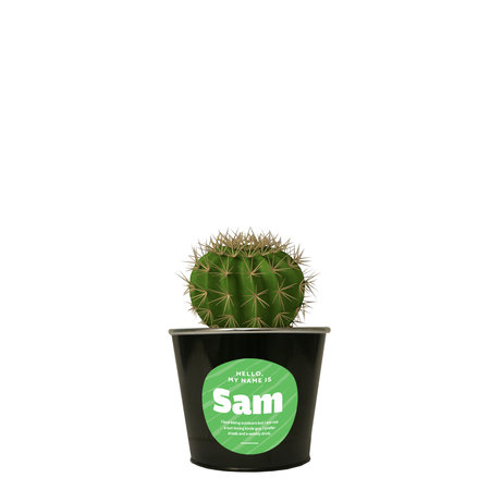 Sam the Cactus